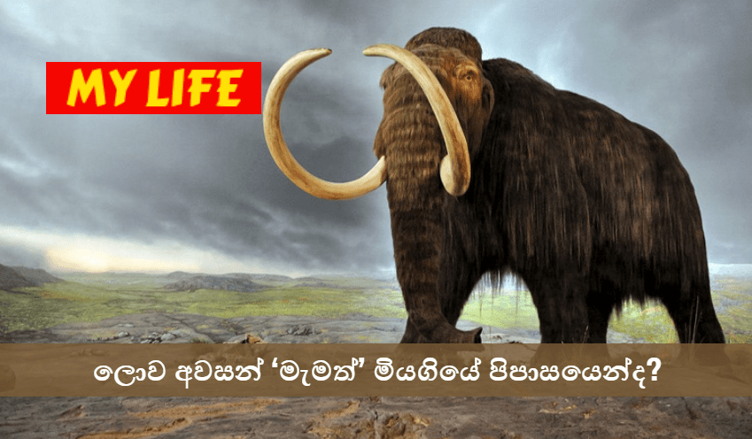 What doomed mammoths on a remote island? - My Life