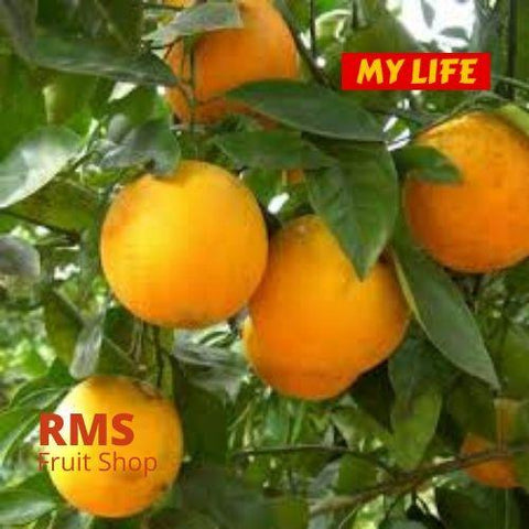 (Retail & Wholesale) Best Sweet Orange by RMS Fruit Shop - RMS Fruit Shop - mylife-sa.myshopify.com