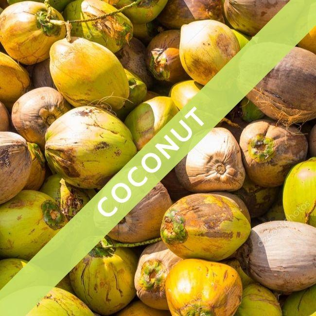 (Special Ad) (Wholesale Only) Coconut - Maduwa Balapitiya - Non Categorized - mylife-sa.myshopify.com