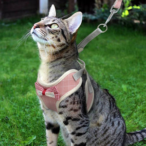 Loki Cat Harness And Leash