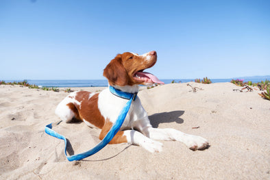 Choosing the Best Collars and Leads For Your Dog