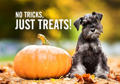 NO TRICKS, JUST TREATS IN OCTOBER!