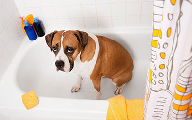 Spring Cleaning: Check, Clean, or Replace Pet Products