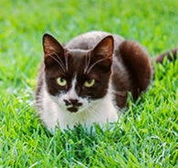 CATS 101: WHAT IS WHISKER FATIGUE?