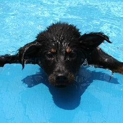 BEAT THE HEAT! TIPS TO KEEP YOUR DOG COOL THIS SUMMER