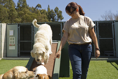 Doggie Day School: Worth the Money?