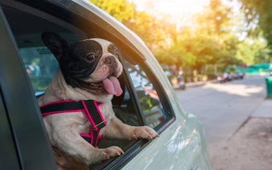 Help Your Pets Beat the Heat This Summer!