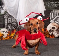 FETCH PORTRAITS RETURNS THIS HALLOWEEN SEASON IN CHICAGOLAND