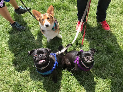 KRISER'S SPENDS THE DAY AT BARK IN THE PARK