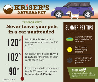 INFOGRAPHIC NEVER LEAVE YOUR PETS UNATTENDED IN A CAR