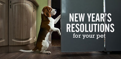 NEW YEAR PET RESOLUTIONS FOR 2017