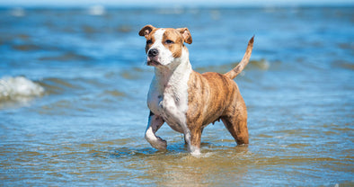 Doggie Water and Swim Safety Tips!