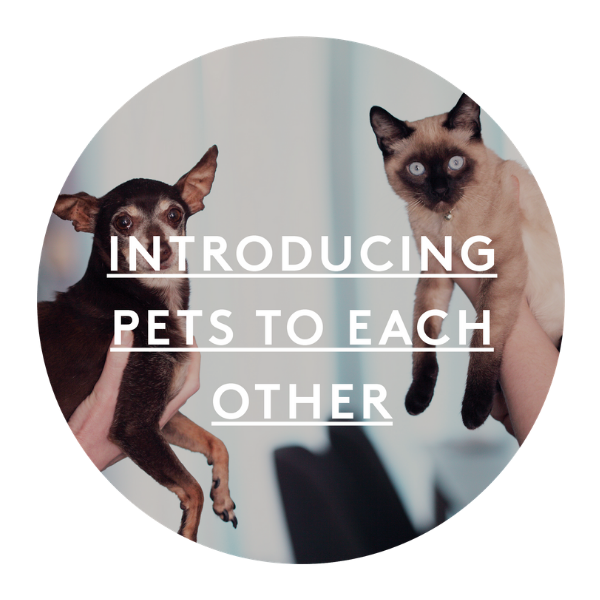 introducing pets to each other