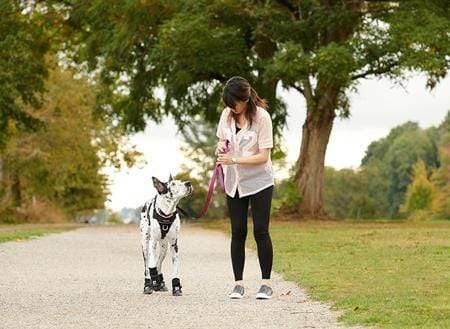 RC Pet Strider Dog Boot