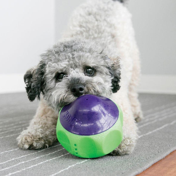 KONG Babbler Motion Activated Babbling Dog Toy