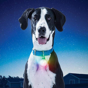 Nite Ize Spotlit XL Rechargeable Collar Light for Dogs