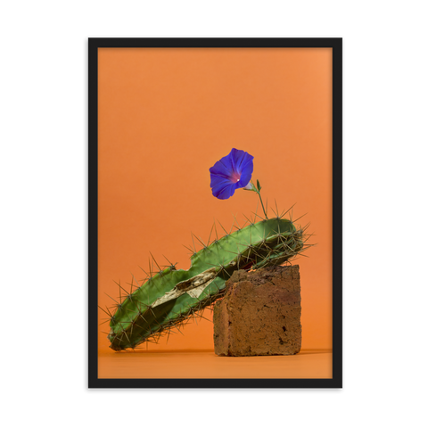 Cactus by Sabrina Srur - photography print