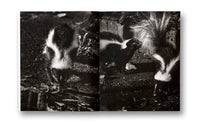 Spread of photobook Dyckman Haze by Adam Pape, Mack photography book