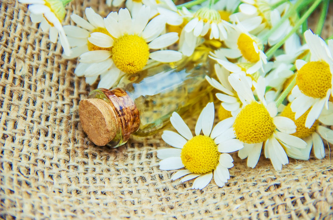The Benefits of Chamomile