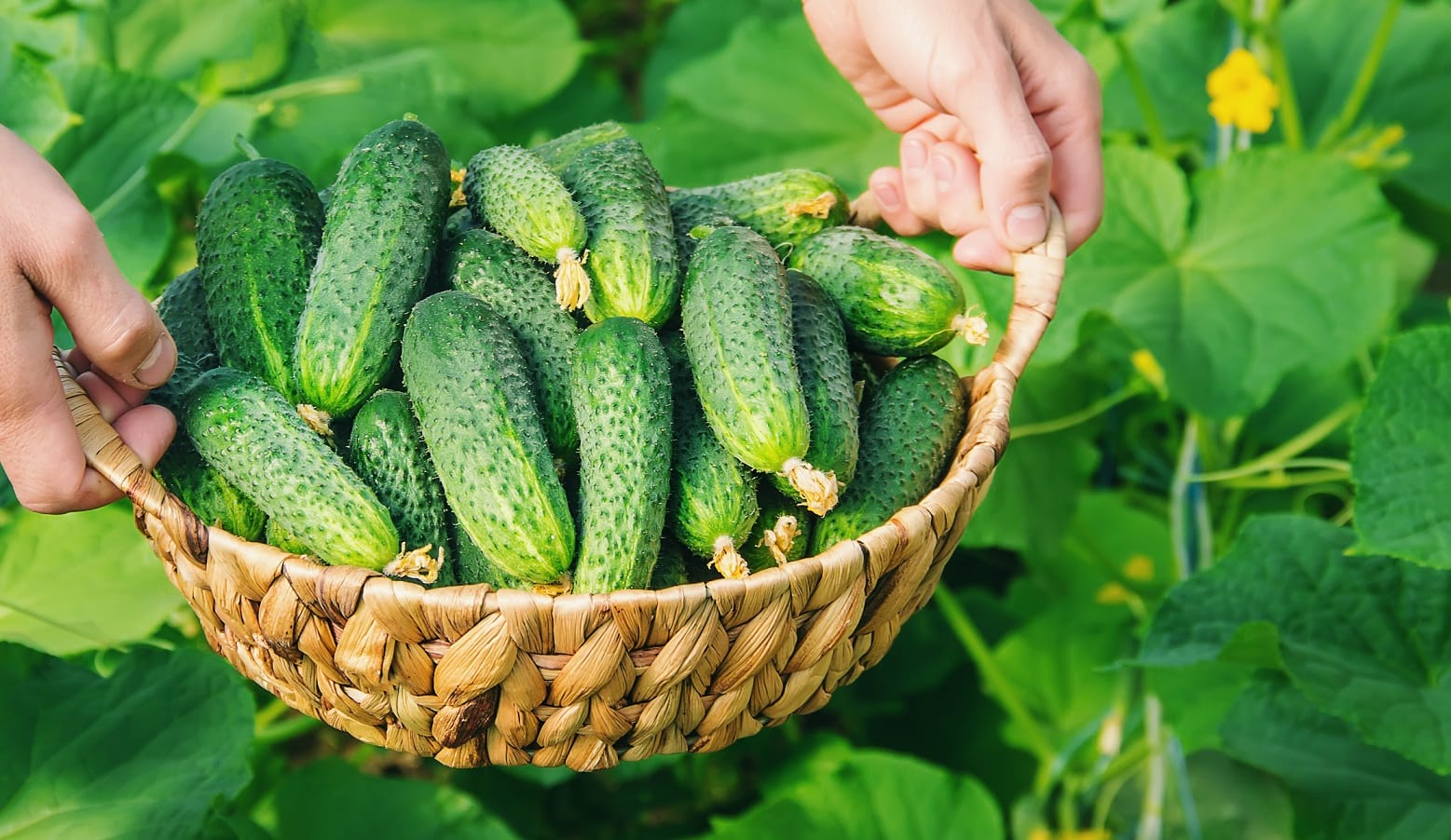 Benefits of Cucumber on Skin