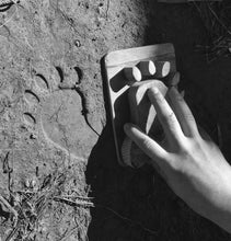 Load image into Gallery viewer, Black Bear Animal Tracks