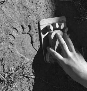 Black Bear Animal Tracks