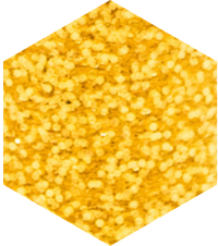 No-Plastic GOLD