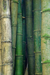 Cultivate Bamboo Color Inspo | Bibilo