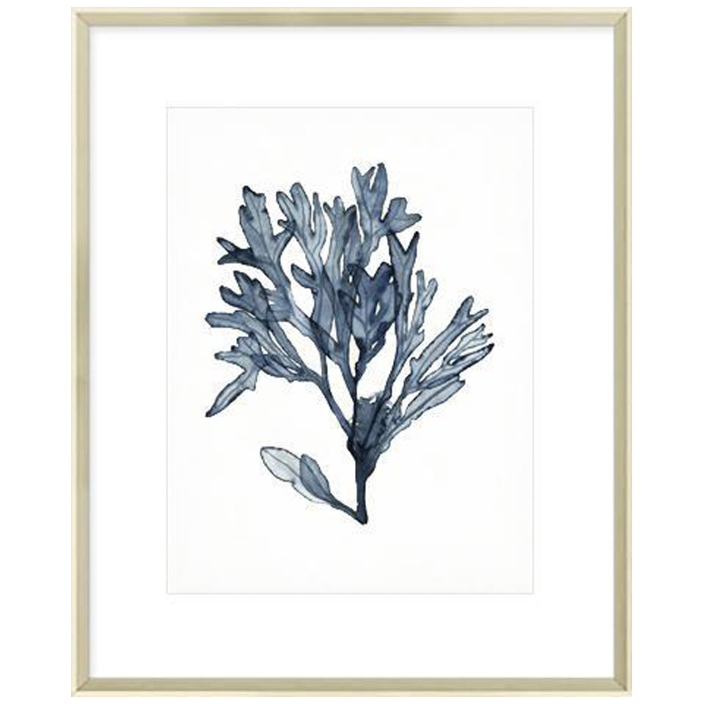Seaweed Specimens II Framed Print-Bibilo