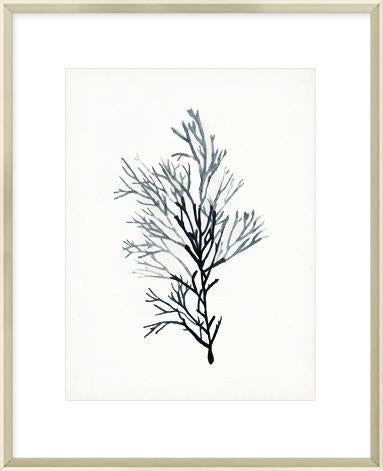 Seaweed Specimens IV Framed Print-Bibilo