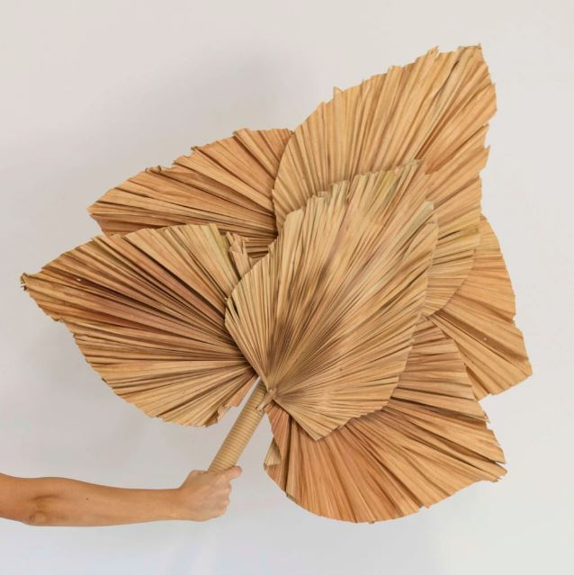 Palm Leaf Fan Wall Art-Bibilo