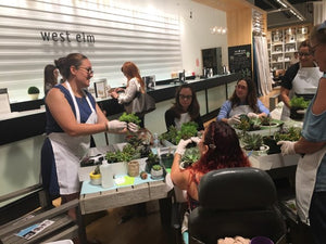 Succulent Bowl Workshop