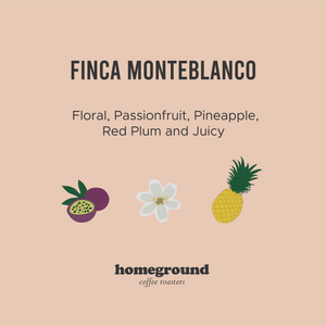 Finca Monteblanco, Colombia (Filter)