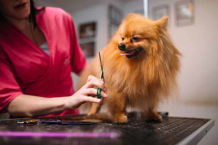 How to Reduce Dog Hair Shedding