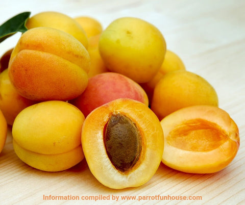Safe fruits for birds apricot