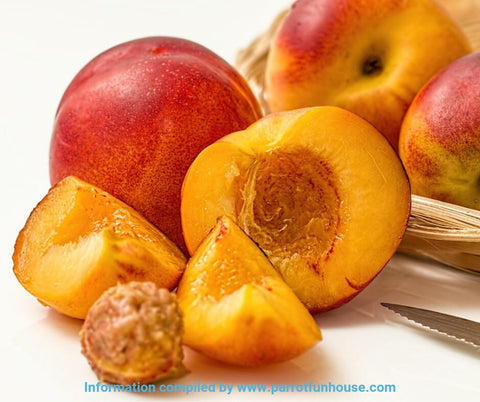 Safe fruits for birds nectarine