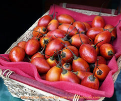 Safe fruits for birds tamarillo