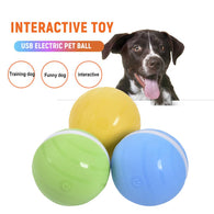 Motion Ball For Pets - Shop For Gamers