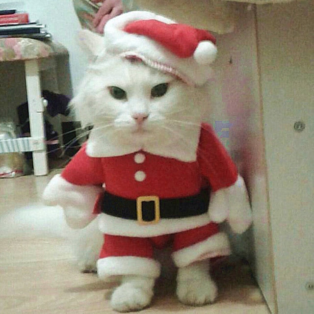 Christmas Cat Clothes - Shop For Gamers