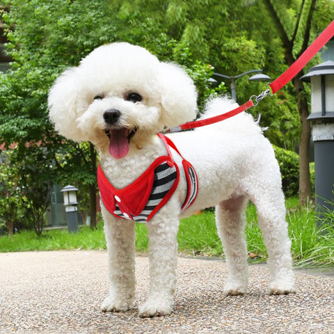 Adjustable Harness Vest & Leash
