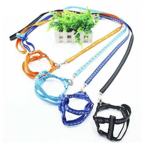 Adjustable Lead Belt & Leash