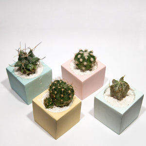 Bo Design mini cactus in a concrete cube pot - mint, yellow, blue, pink