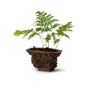 DRN TURF brown clay flower pot resembling a piece of earth with fern. Size E.