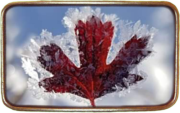 Canadian Flag NEW Frosted Leaf Buckle