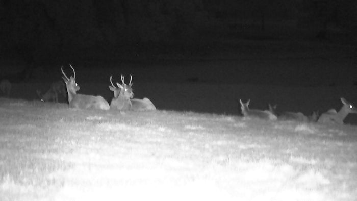 Digital nightvision in action - A walk in the woods