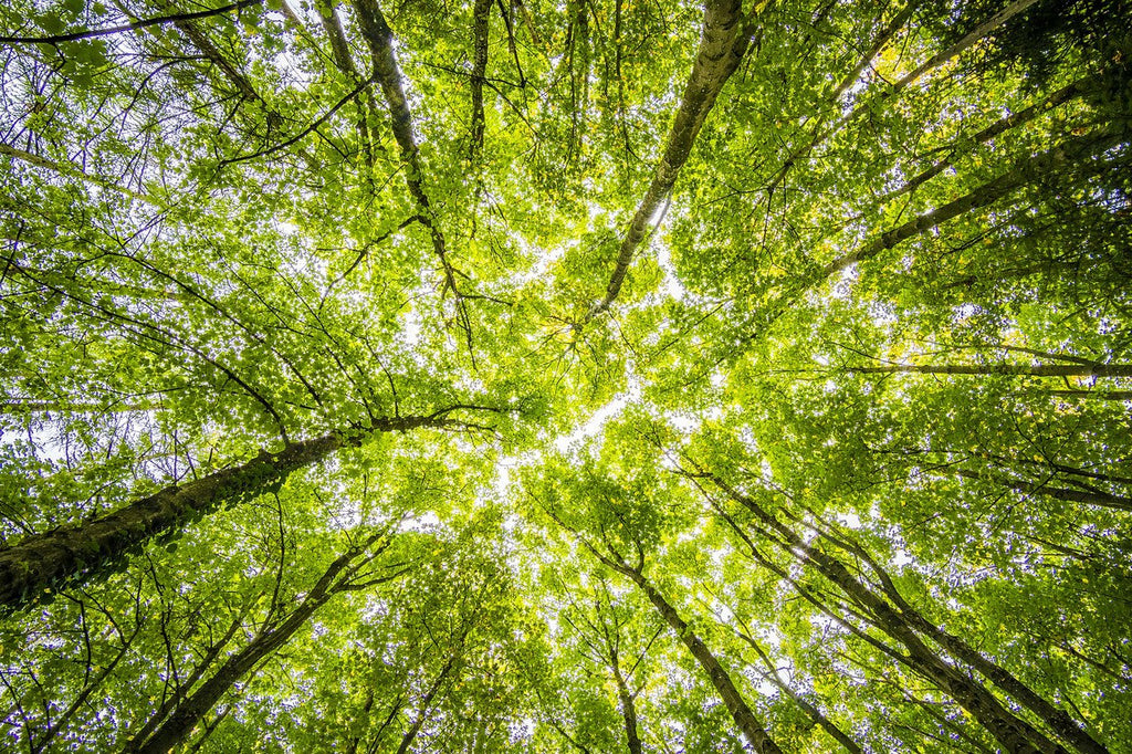 How to Save Trees: 5 Ways to Protect Our Forests