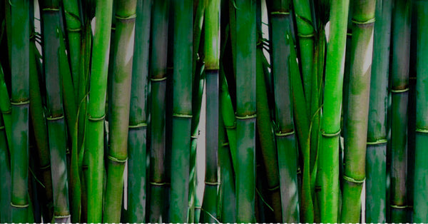 Bamboo plant - Reel®
