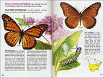 Butterflies And Moths (A Golden Guide From St. Martin'S Press)