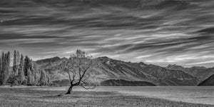 Standing Alone - Lake Wanaka New Zealand