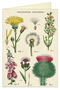 CARD WILDFLOWERS